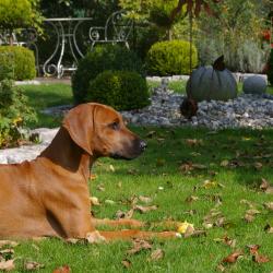 Leoto im Garten 07