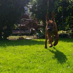 Leoto im Garten 08