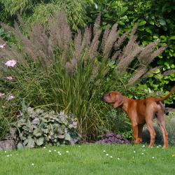 Leoto im Garten 10