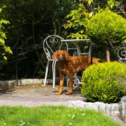 Leoto im Garten 21