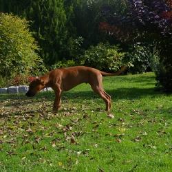 Leoto im Garten 02