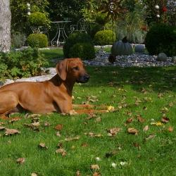 Leoto im Garten 05