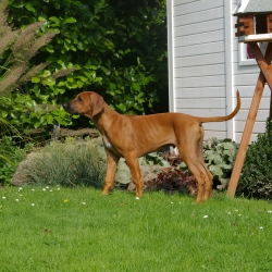 Leoto im Garten 09