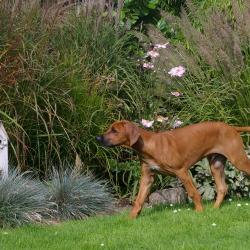 Leoto im Garten 12