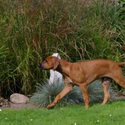 Leoto im Garten 13