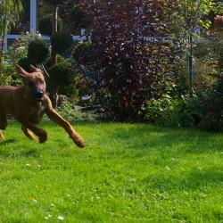 Leoto im Garten 16