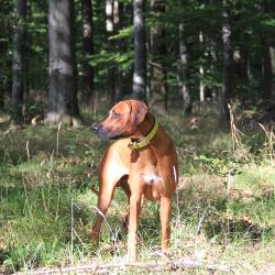 Waldspaziergang 04
