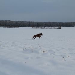 Winterspaziergang 07