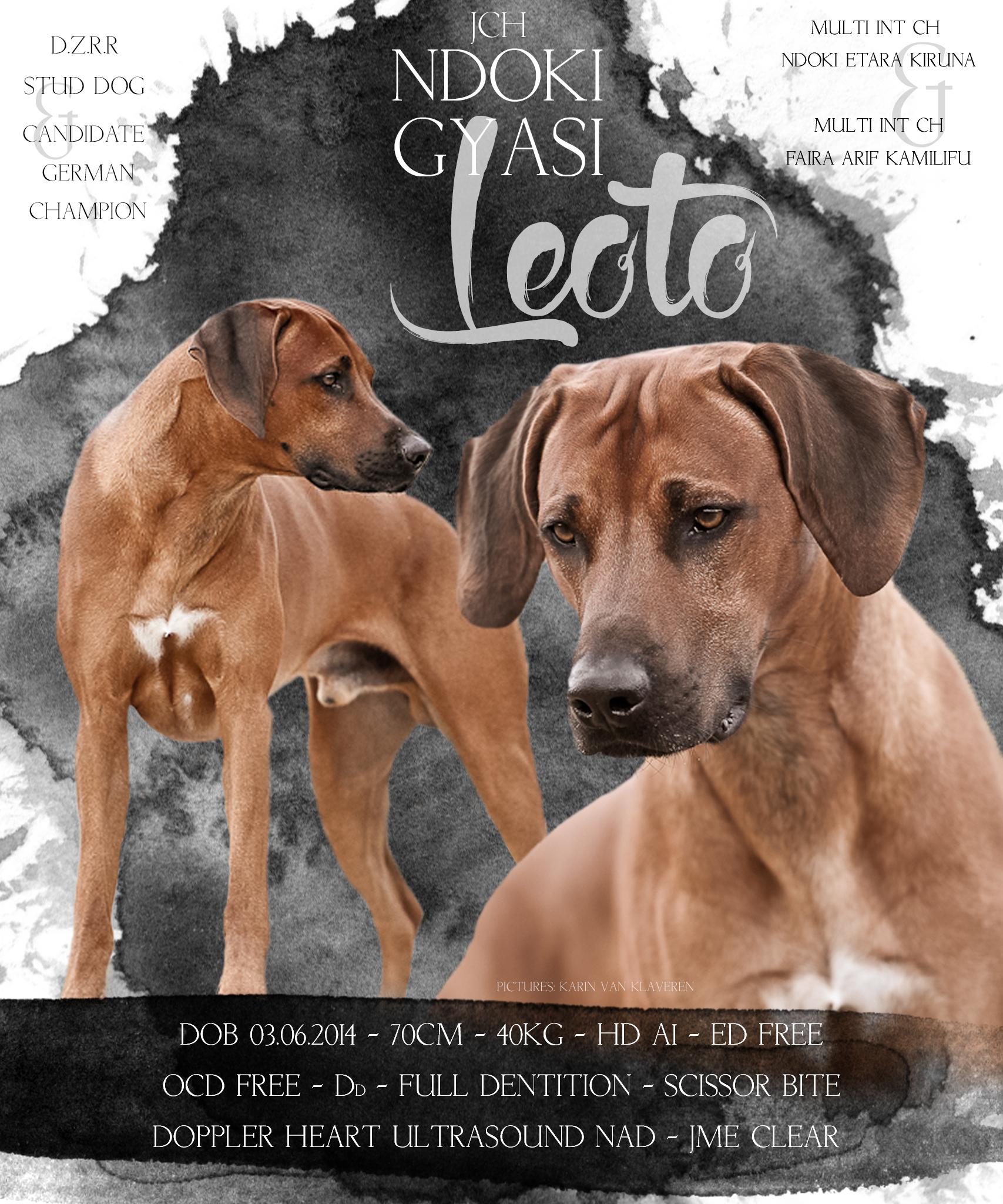 Leoto ist JME clear